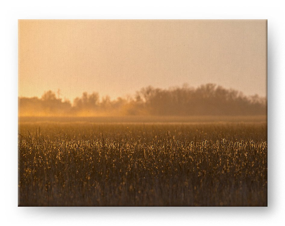 Cattail Sunset Gallery Mounted Canvas Landscape Photo Print - Whimsical Wild Artwork