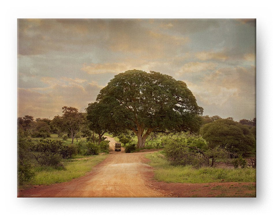 South Africa Safari Tree Gallery Mounted Canvas Landscape Photo Print