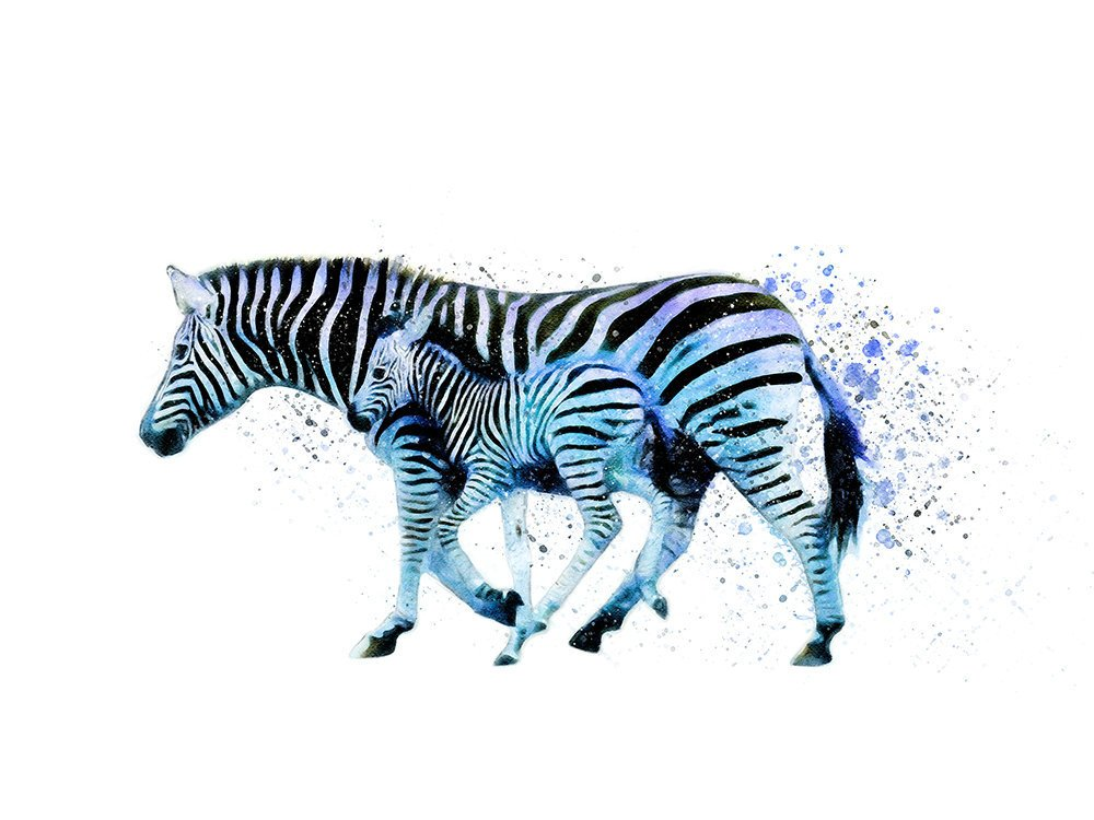 Zebra Mother and Baby Watercolor Animal Print