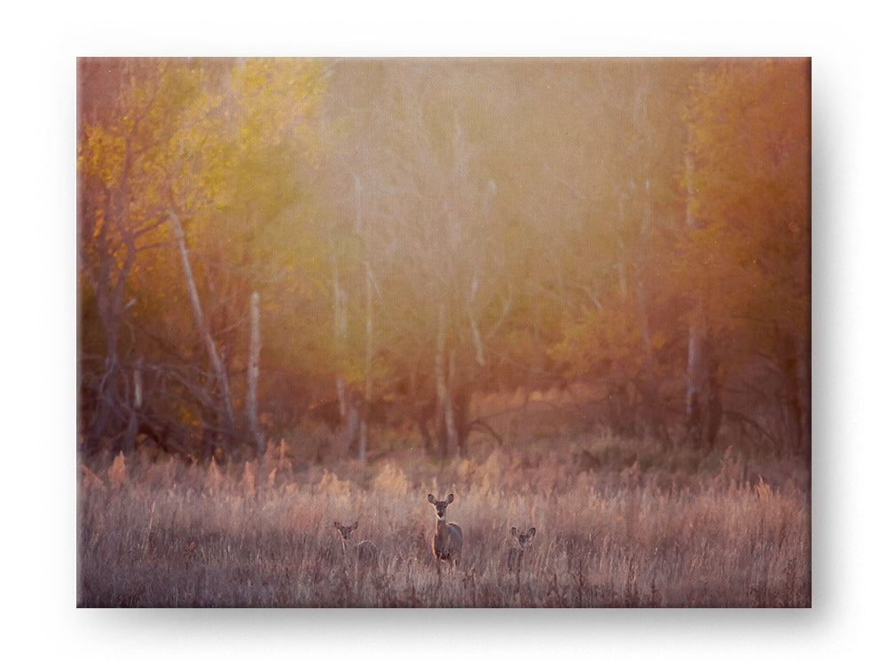 Deer and Fawns Gallery Mounted Canvas Landscape Photo Print - Whimsical Wild Artwork