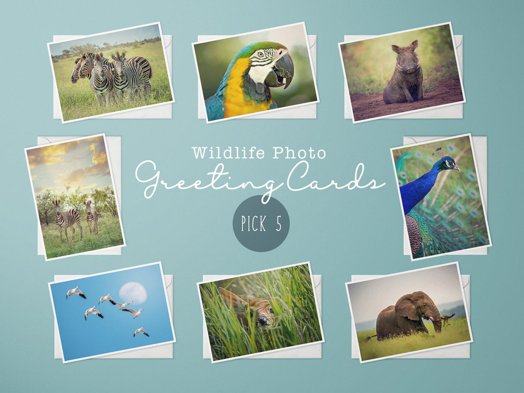 Wildlife Photography Greeting Cards, Choice of 5 Cards