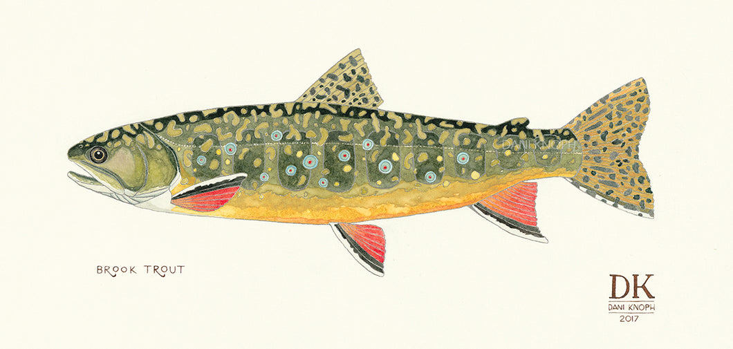 Brook Trout Print