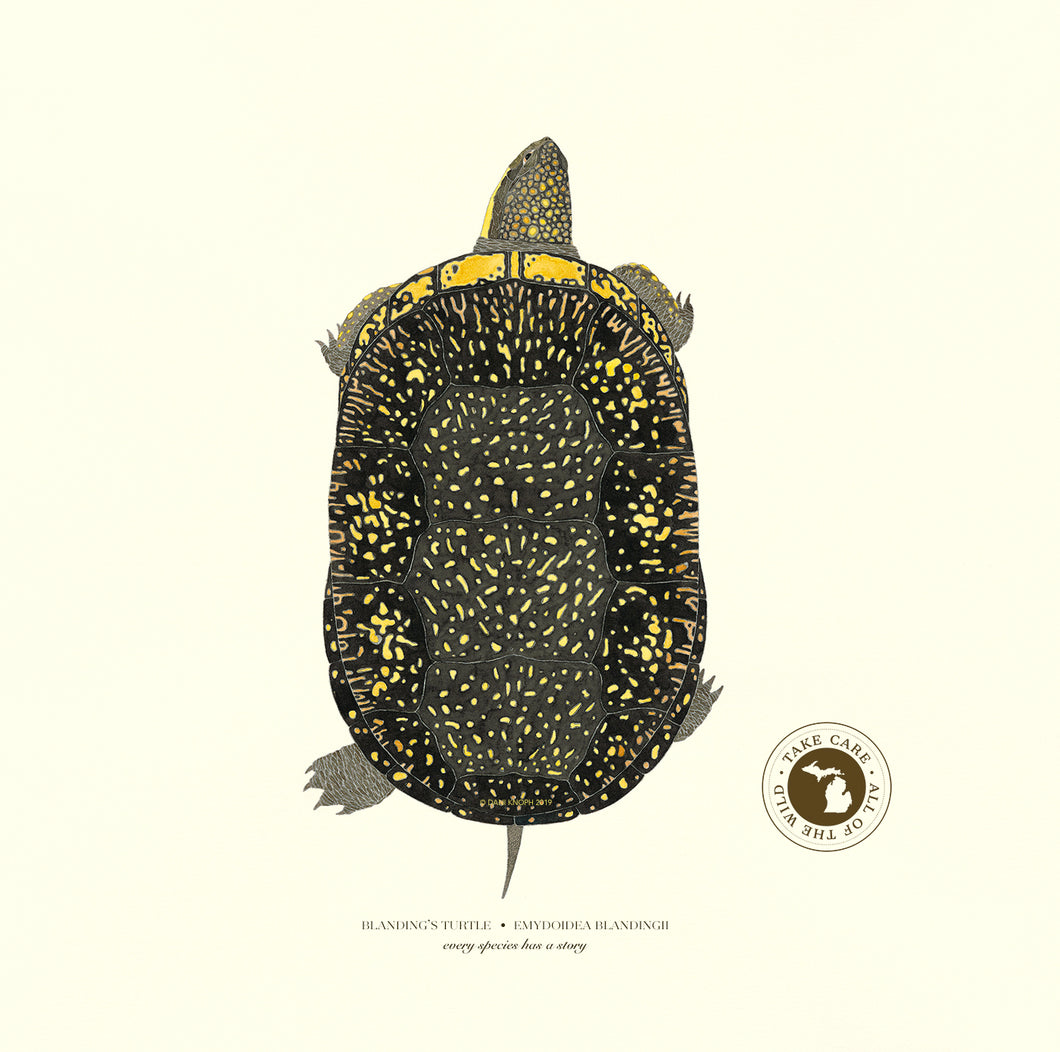 Michigan Blanding's Turtle Print