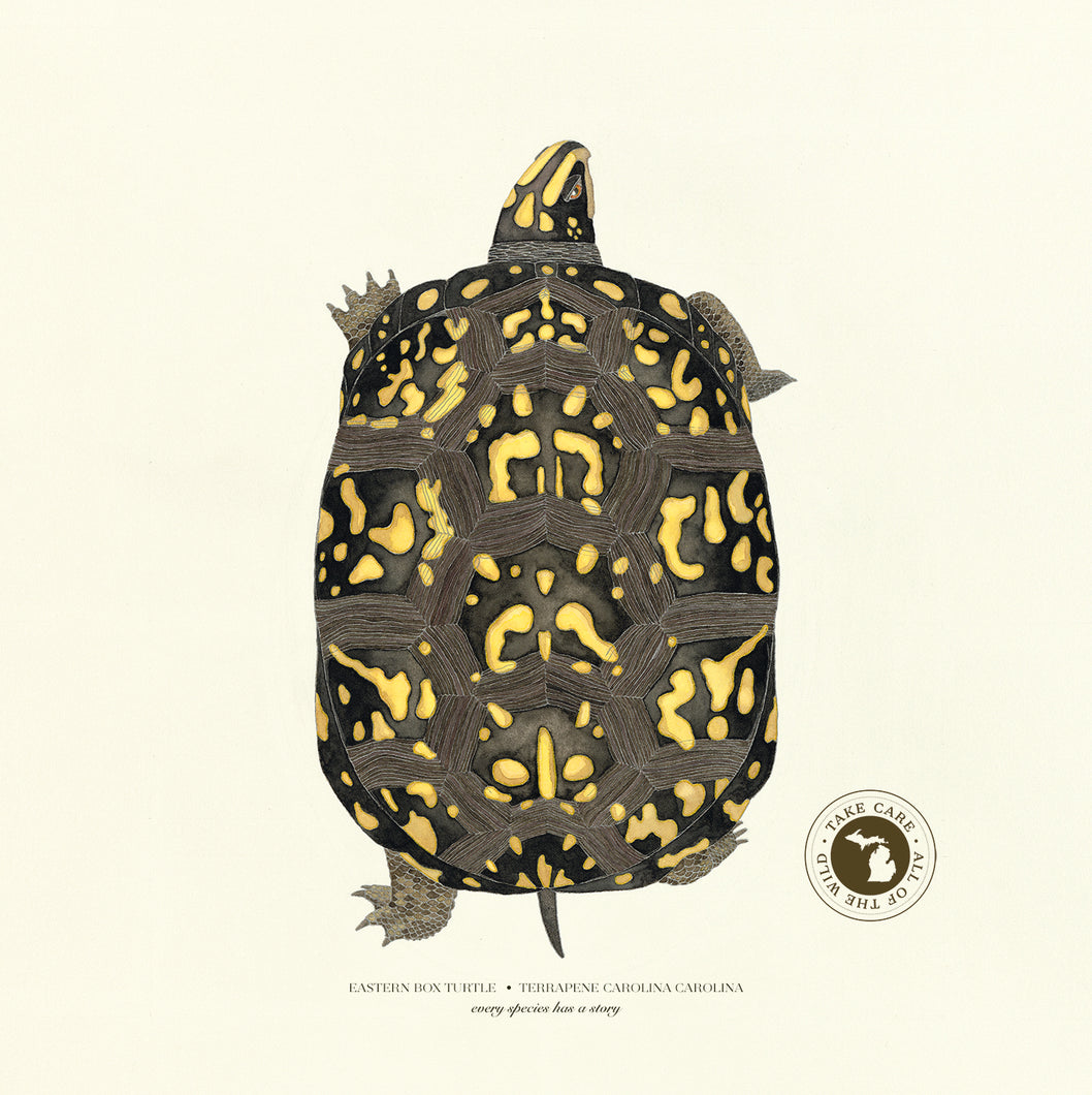 Michigan Eastern Box Turtle Print