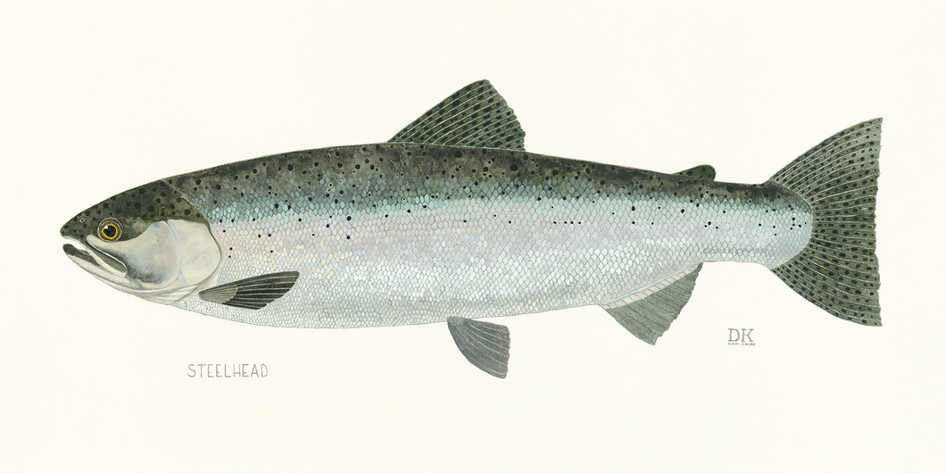 Steelhead Fish Print