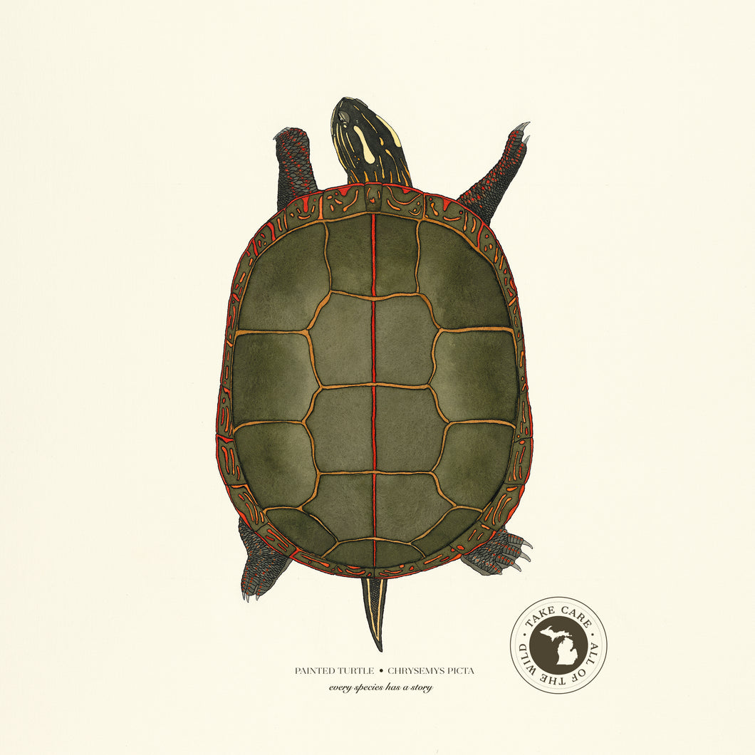 Michigan Painted Turtle Print