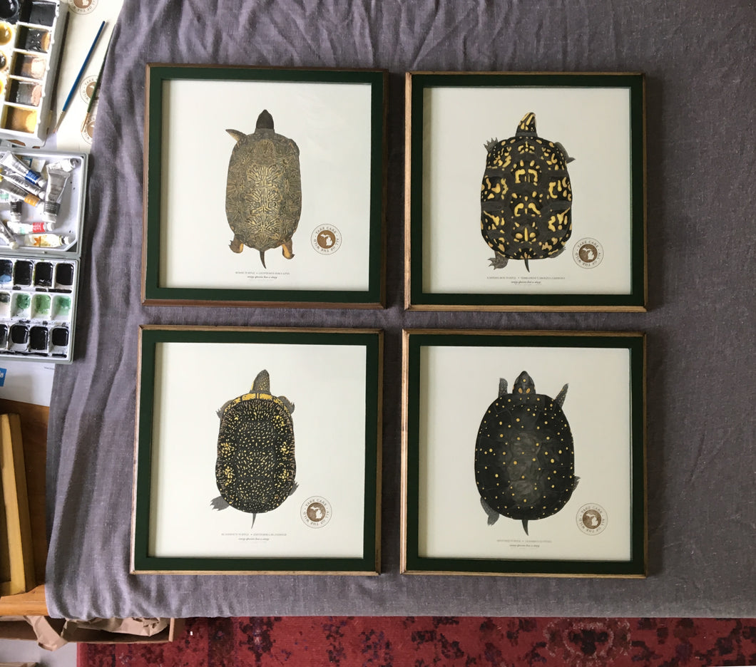 4 Framed Michigan Turtle Prints