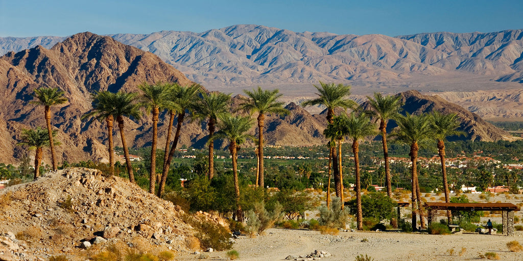 Headed to the Desert to Visit Coachella?