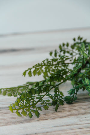 Maidenhair Fern Stem