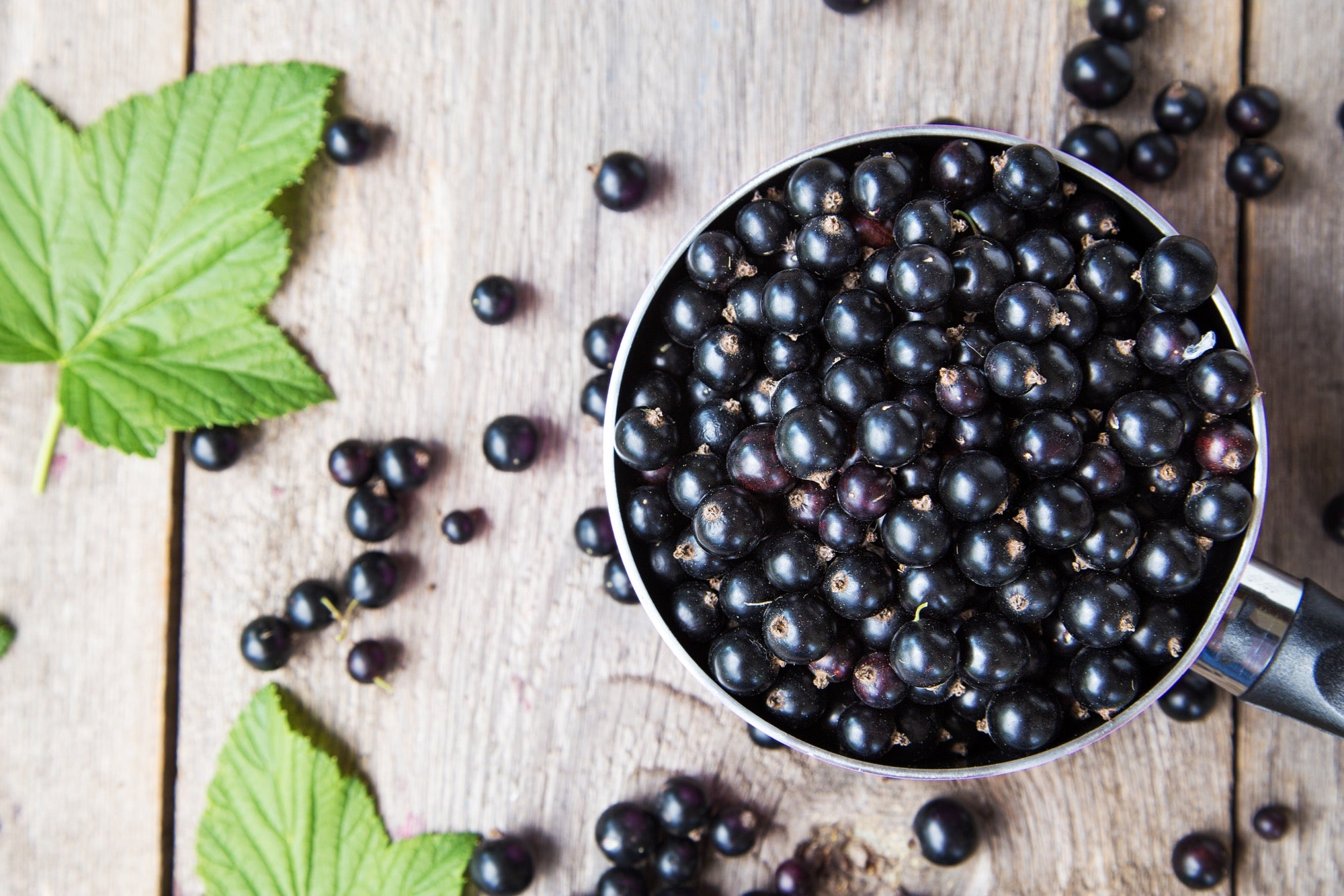 Why we love blackcurrants