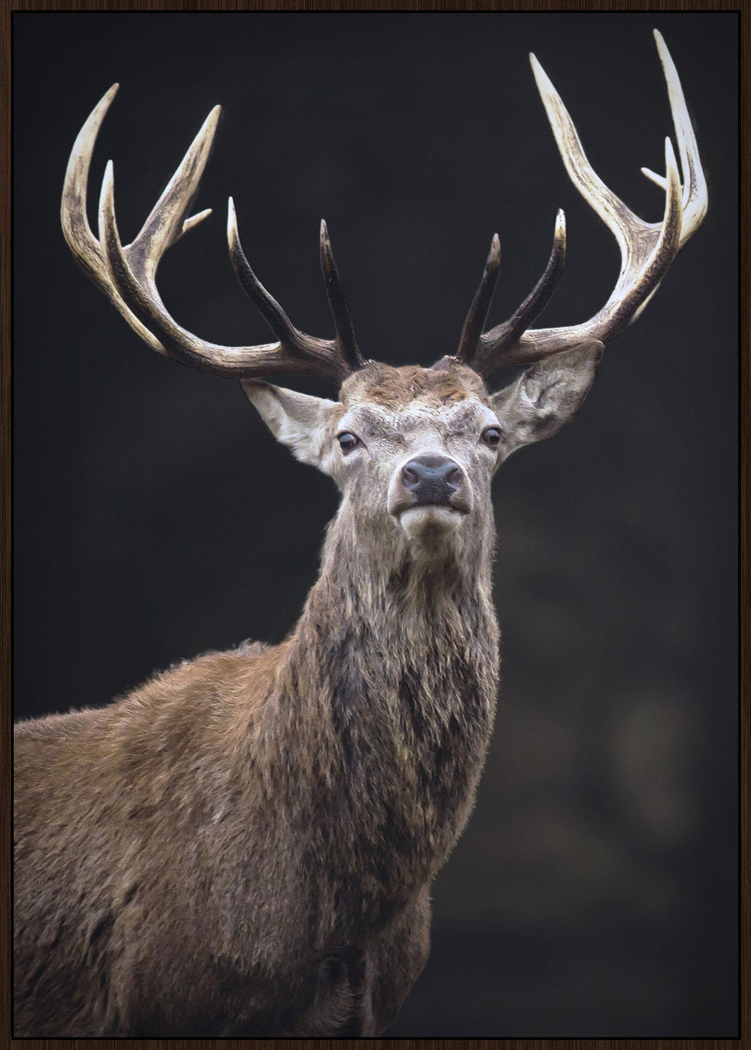 Canvas Print - Noble Stag - Rosie's Gifts and Homeware - Gift Shop NZ