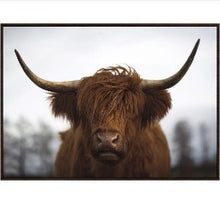 Canvas Print - Highland Red - Rosie's Gifts and Homeware - Gift Shop NZ