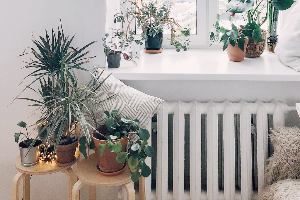 The 8 Best Plants For Your Bedroom