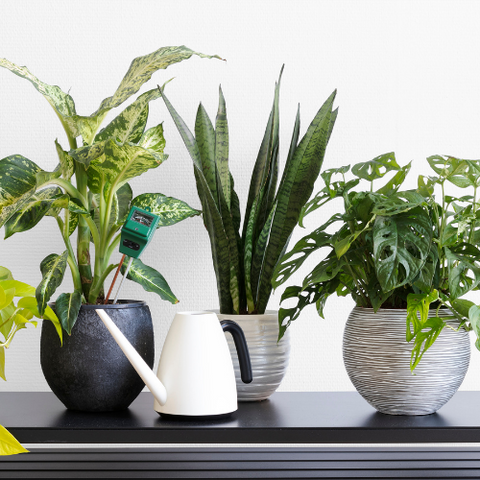 Indoor Plants for pantry decoration
