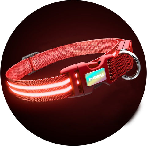 LED Light Up Safety Collars