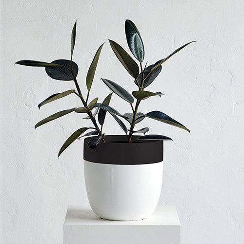 Crown Planter Pot