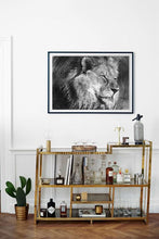 """Khari"" Lion Sketch - Contemporary Australian Artist Christina Di Bona - CMD Artistry"