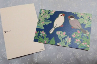 Java Sparrow Postcard Yukie-43 - Boutique SWEET BIRDIE