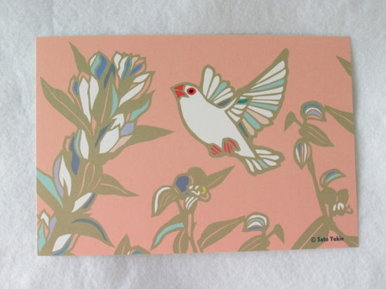 Java Sparrow Postcard Yukie-49 - Boutique SWEET BIRDIE