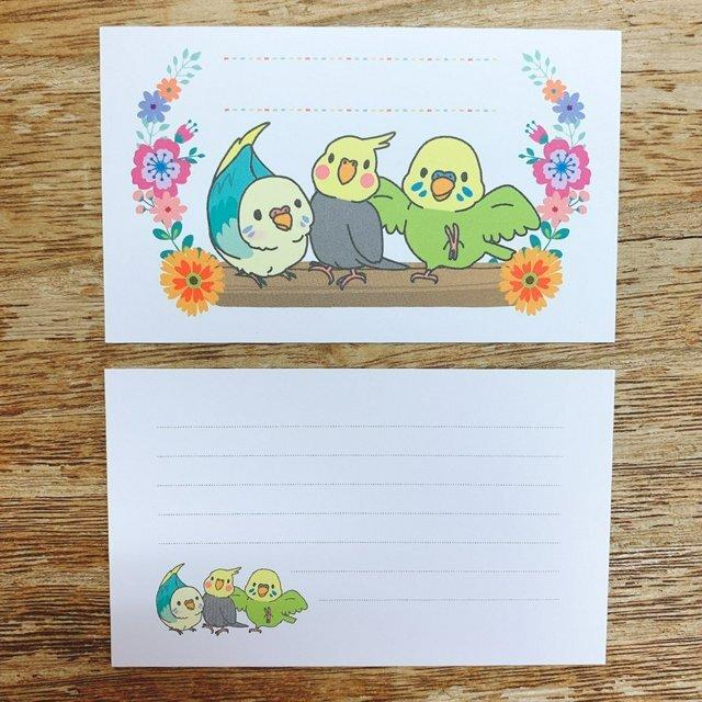 Sets of 10 Mini Message Cards Budgie Budgerigar Parakeet Cockatiel