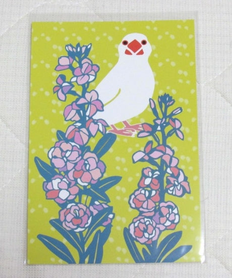 Java Sparrow Postcard Yukie-39