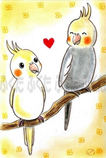 Cockatiel Postcard