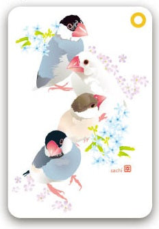 Java Sparrow Pass Holder