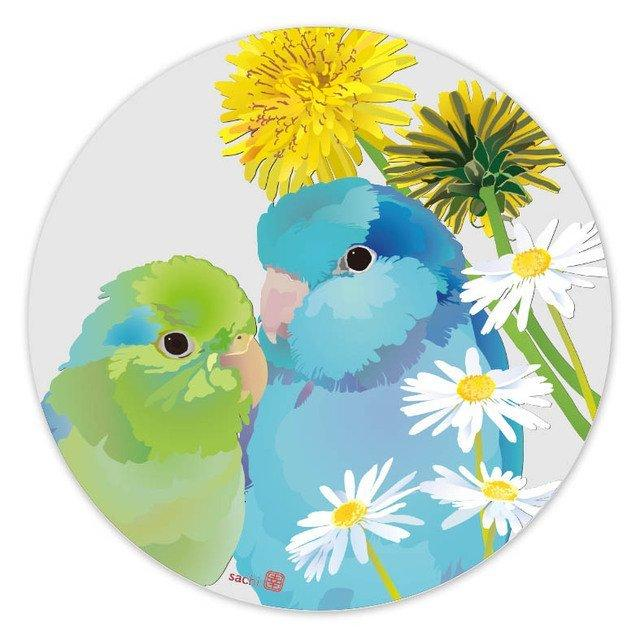 Pacific Parrotlet Coaster
