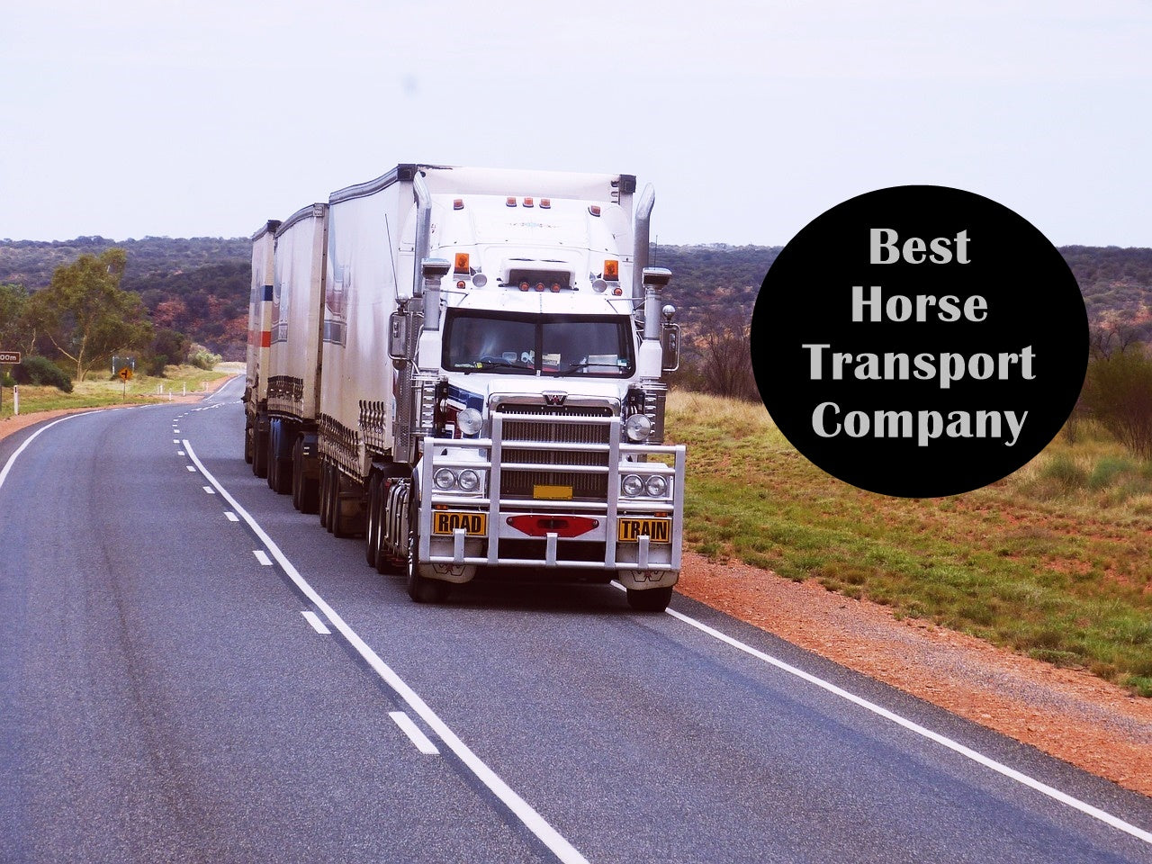 Starting a Horse Transport Business
