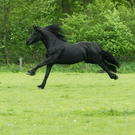 how-much-does-a-friesian-horse-cost