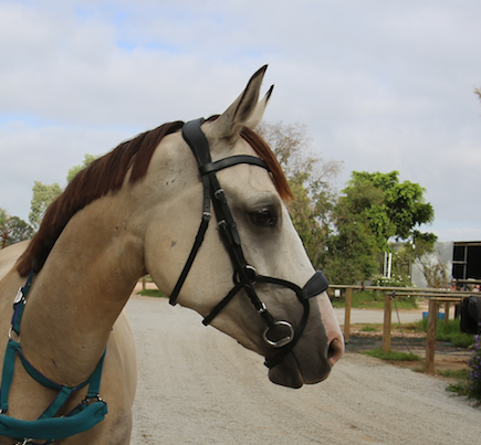 Ergonomic Bridle