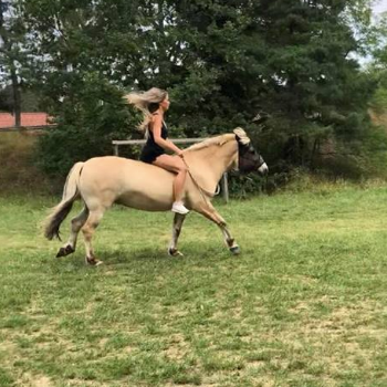 how-to-canter-bareback