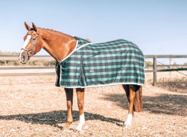 ProHorse | Afterpay Saddlery - Free Shipping