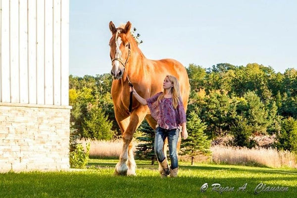 largest-horse-breed