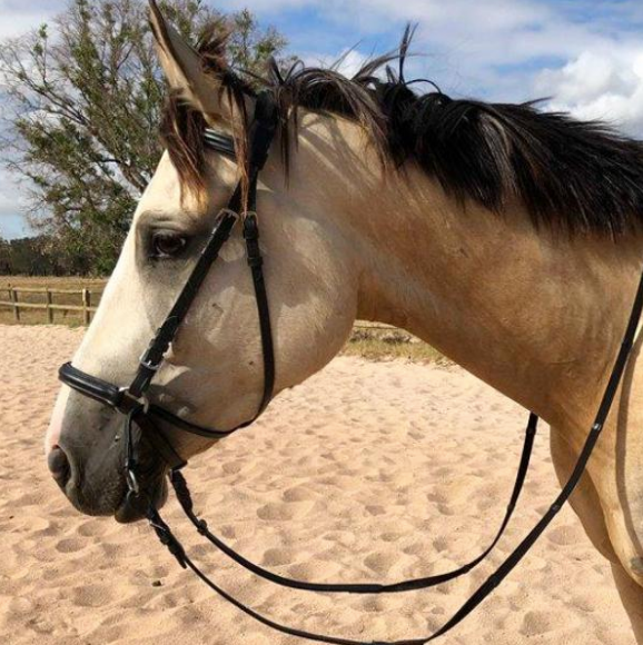 best-bitless-bridle-for-dressage