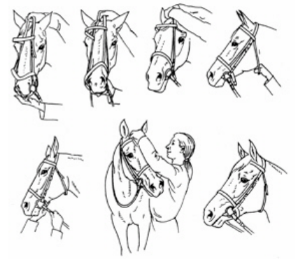 how-to-tack-up-a-horse