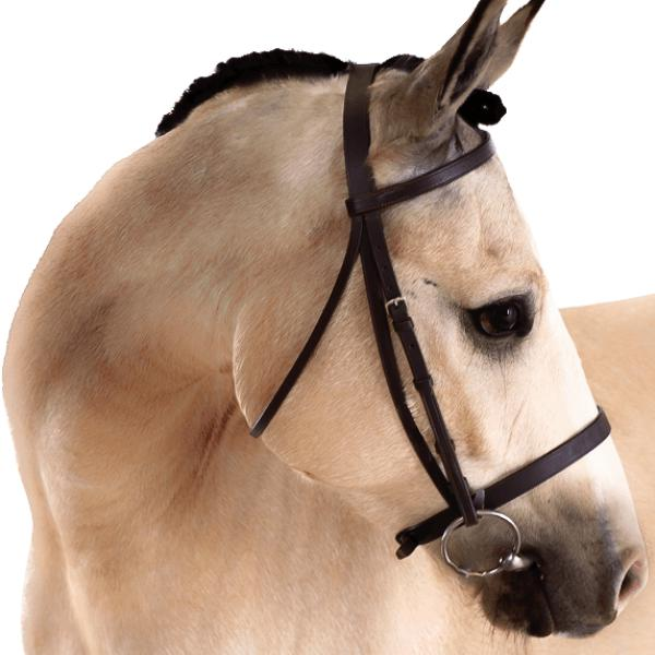Flat-Cavesson-Bridle