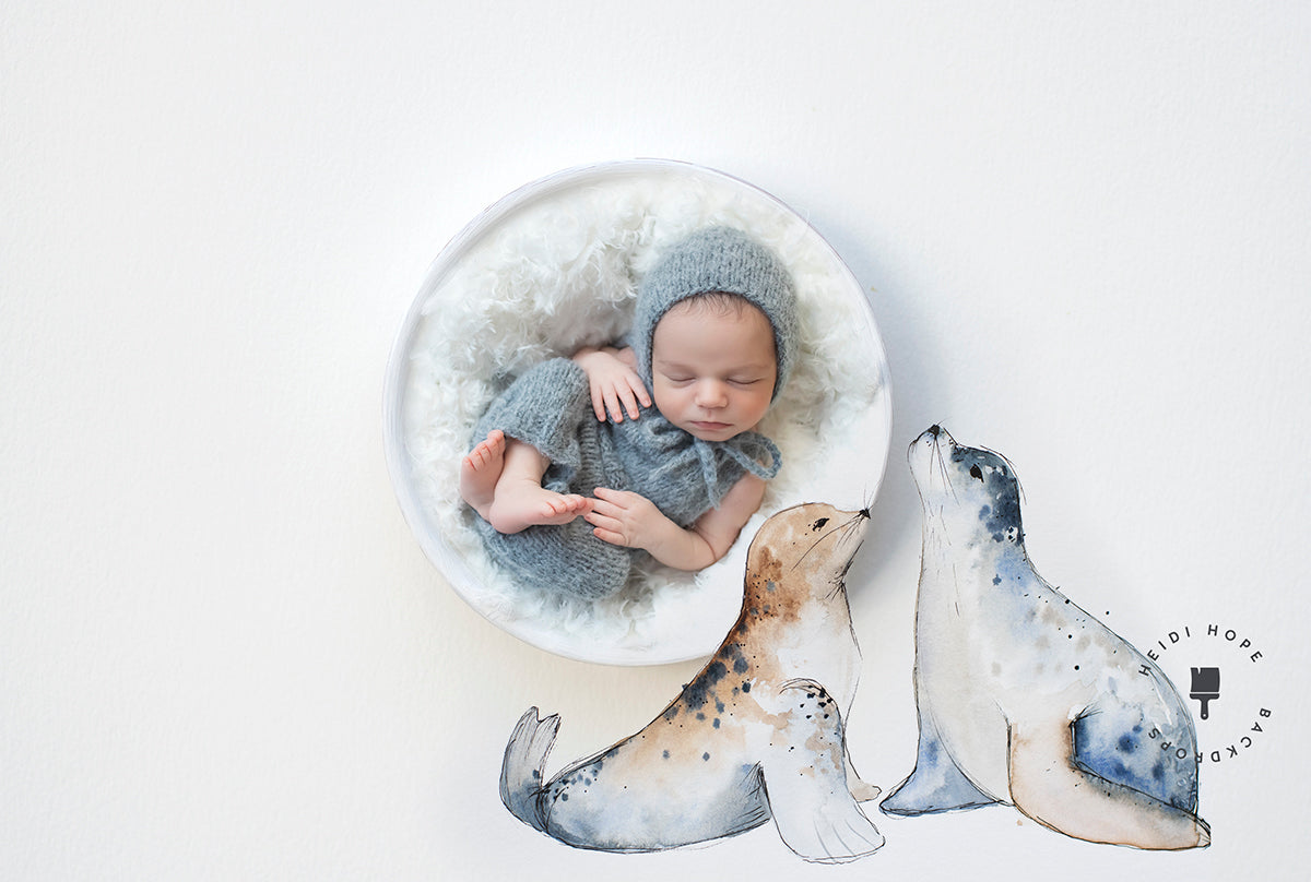 Digital Backdrop | Baby Seals