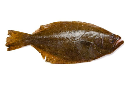 Live Halibut (Flounder) - Evergreen Seafood
