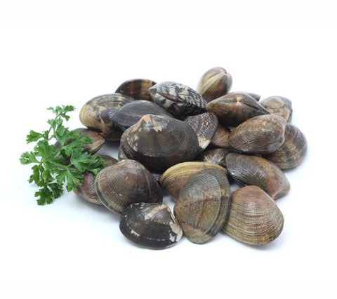 Buy Live USA Manila Clams Online for Delivery - Evergreen Seafood Singapore