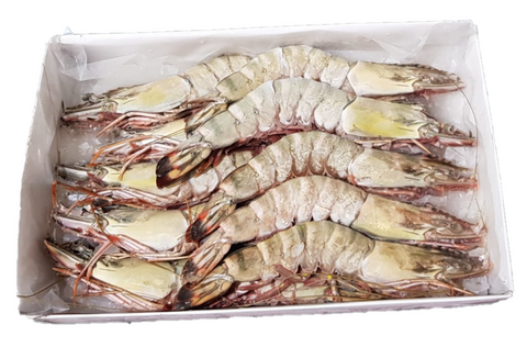 Buy Frozen Sea Tiger Prawn (Wild Catch) Online for Delivery - Evergreen Seafood Singapore
