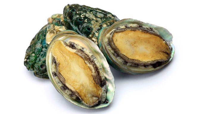 Buy Live Abalone Online for Delivery - Evergreen Seafood Singapore