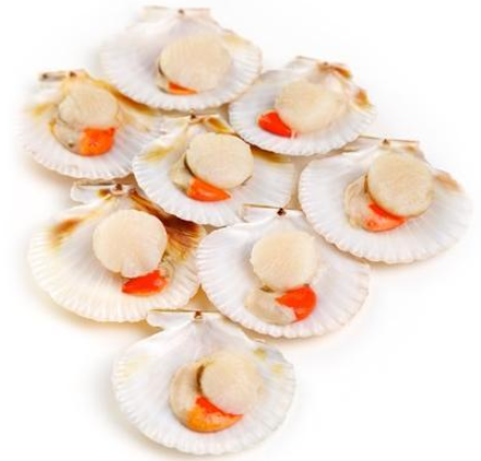 Frozen Half Shell Scallops with Roe - Evergreen Seafood