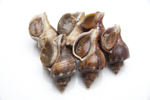Buy Live Sea Whelk Online for Delivery - Evergreen Seafood Singapore