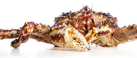 Live Alaskan King Crab - Evergreen Seafood