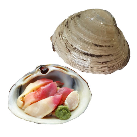 Buy Live Arctic Surf Clam (Hokkigai) Online for Delivery - Evergreen Seafood Singapore