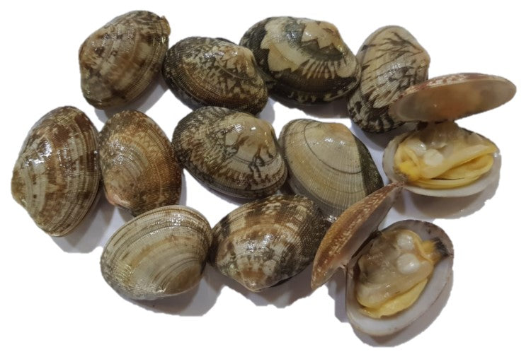 Buy Live Korea Little Neck Clams (Asari) Online for Delivery - Evergreen Seafood Singapore