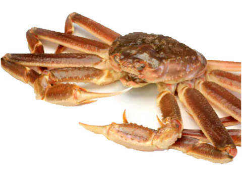 Buy Live Snow Crab Online for Delivery - Evergreen Seafood Singapore