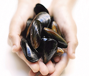 Live Chilled Australia Mussels - Evergreen Seafood