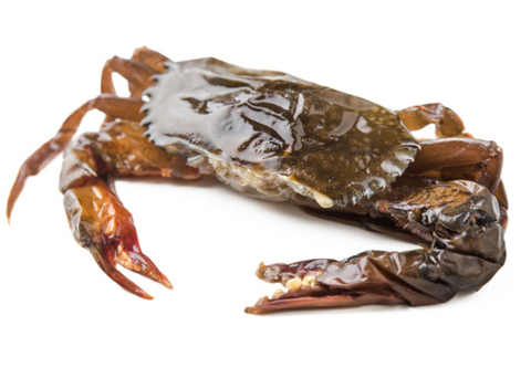Buy Frozen Softshell Crab Online for Delivery - Evergreen Seafood Singapore